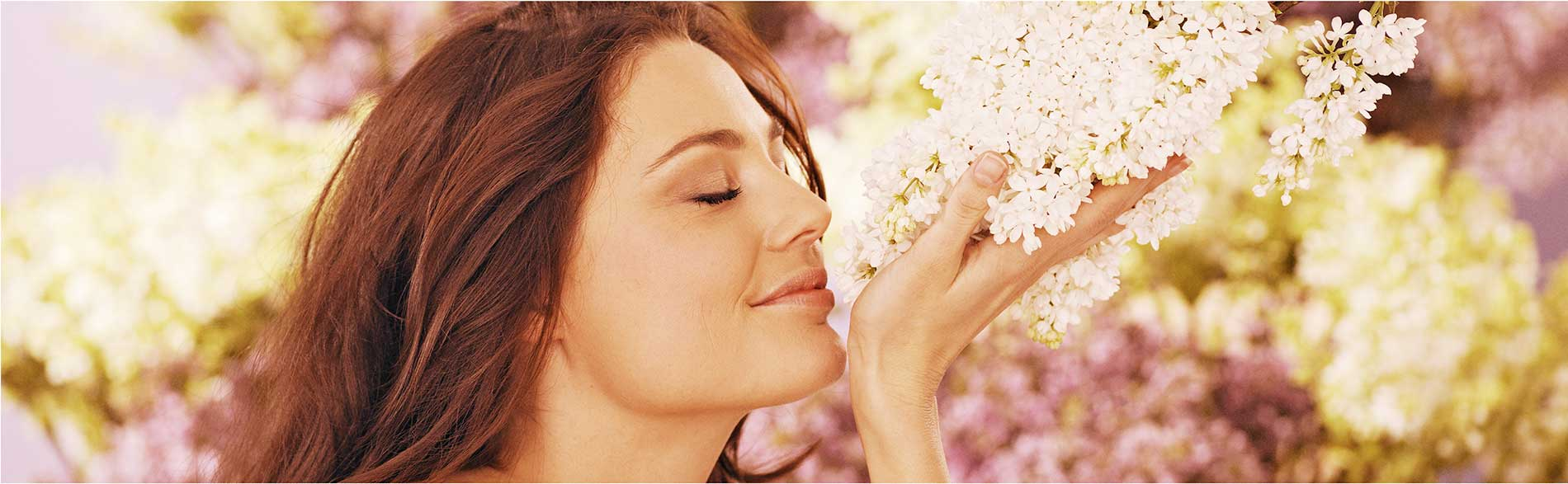 The best fragrant lilacs <Br> for the garden